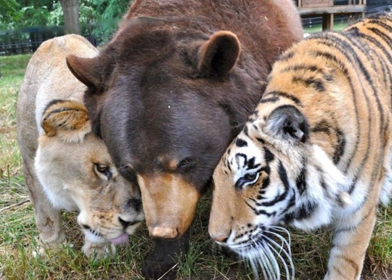 [VIDEO] Tình bạn trong thế giới động vật