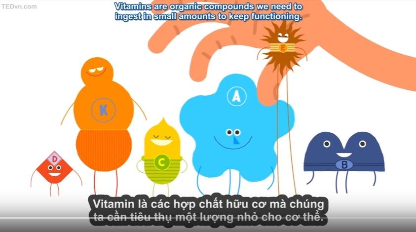 video vitamin hoat dong nhu the nao