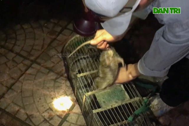 Săn chuột cống - nghề độc nhưng kiếm tiền triệu mỗi đêm - 1