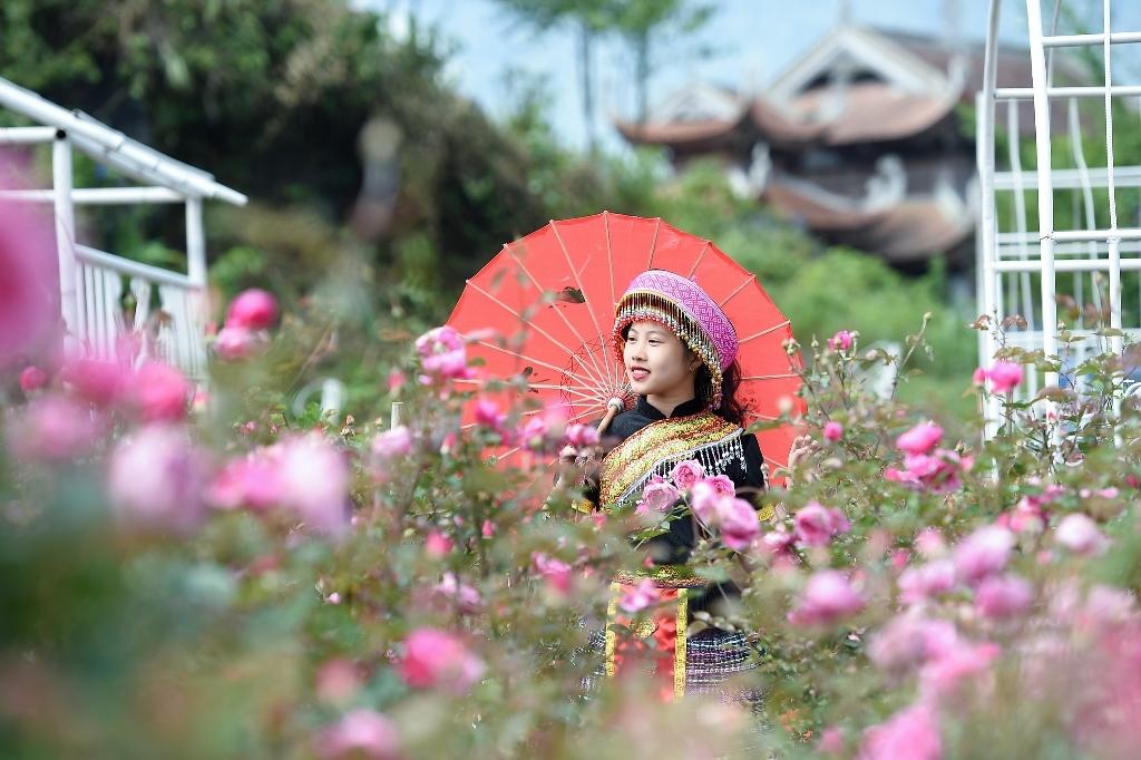 Mùa hoa hồng tại Fansipan