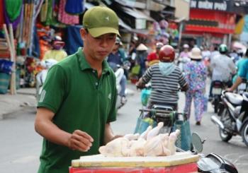 ga de thai loai ban via he 70000 dong mot con khong phai ga trong nuoc