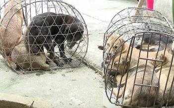 Ba người ăn trộm nửa tấn chó trong một đêm