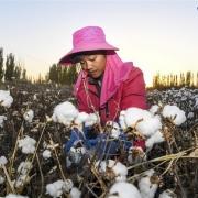 Hạ viện Mỹ thông qua lệnh cấm nhập khẩu hàng hóa từ Tân Cương