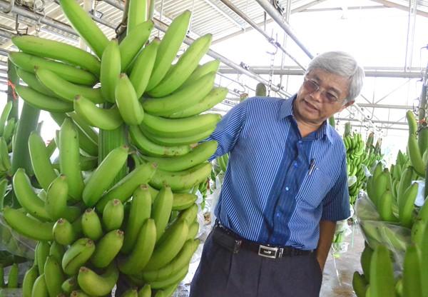 Hơn 20 lần đổi giống cây thất bại, 40 năm kiên trì với nông nghiệp đã làm nên thành công của ông Võ Quan Huy - Giám đốc Công ty TNHH Huy Long An