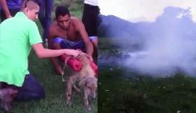 [VIDEO] Phẫn nộ nhóm thanh niên buộc pháo hoa vào chó và cho nổ tung