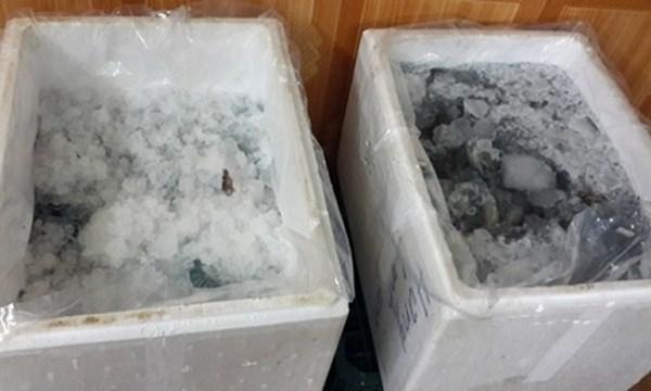 [VIDEO] Hãi hùng cảnh bơm bột vào tôm sú đông lạnh