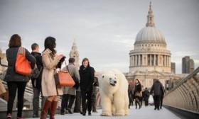 [VIDEO] Gấu bắc cực khổng lồ bất ngờ xuất hiện trên đường phố London