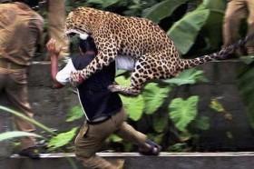 [VIDEO] Khi các loài động vật nổi cơn