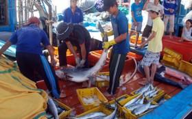 Cá nặng đầy khoang từ Hoàng Sa, Trường Sa
