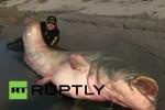 [VIDEO] Bắt được cá trê
