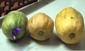 [VIDEO] Rợn người hóa chất làm chín trái cây siêu tốc
