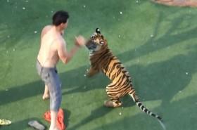 [VIDEO] Hãi hùng người đàn ông đánh nhau với hổ