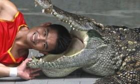 [VIDEO] Cái kết kinh hoàng của chàng trai biểu diễn đưa đầu vào miệng cá sấu