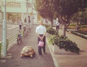 [VIDEO] Cụ ông dắt rùa đi dạo 1,5 km mỗi ngày khiến dân mạng thích thú