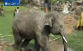 [VIDEO] Kinh hoàng đàn voi phá làng, quật người nằm bẹp dưới ruộng