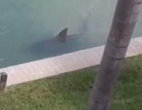 [VIDEO] Hoảng sợ khi thấy cá mập trong bể bơi gia đình