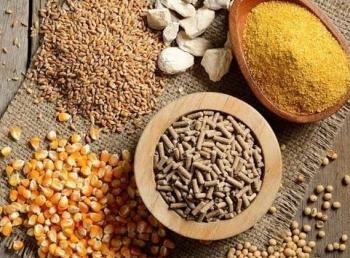 Giá ngô tiếp tục duy trì đà tăng trong khi giá lúa mỳ điều chỉnh nhẹ