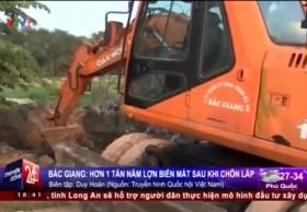 """[VIDEO] Hơn 1 tấn nầm lợn """"biến mất"""" chỉ sau khi chôn lấp gần 1 giờ ở Bắc Giang"""