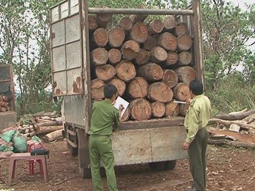 Đắk Lắk: Bắt giữ hơn 11 m3 gỗ lậu