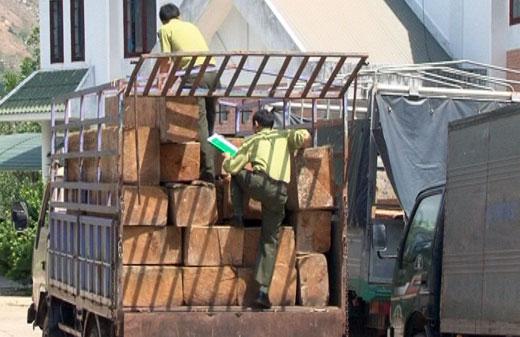 Bắt 2 xe ô tô tải vận chuyển hơn 17 m3 gỗ Pơ mu