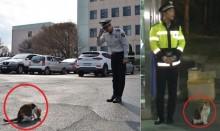 Chuyện con mèo 'trả ơn' ở trạm cảnh sát Hàn Quốc