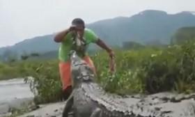 [VIDEO] Người đàn ông dùng tay câu cá sấu khiến nhiều người khiếp vía