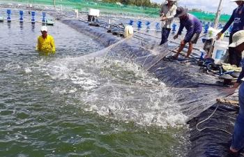 Thủy sản Việt chớp cơ hội trong đại dịch