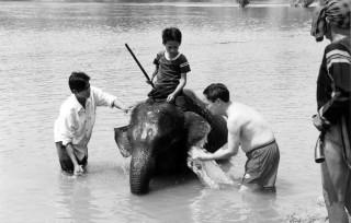 Lên Tây Nguyên... nhìn voi tuyệt chủng!