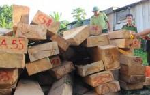 Kiểm tra tổ chức, cá nhân liên quan vụ phá rừng pơ mu