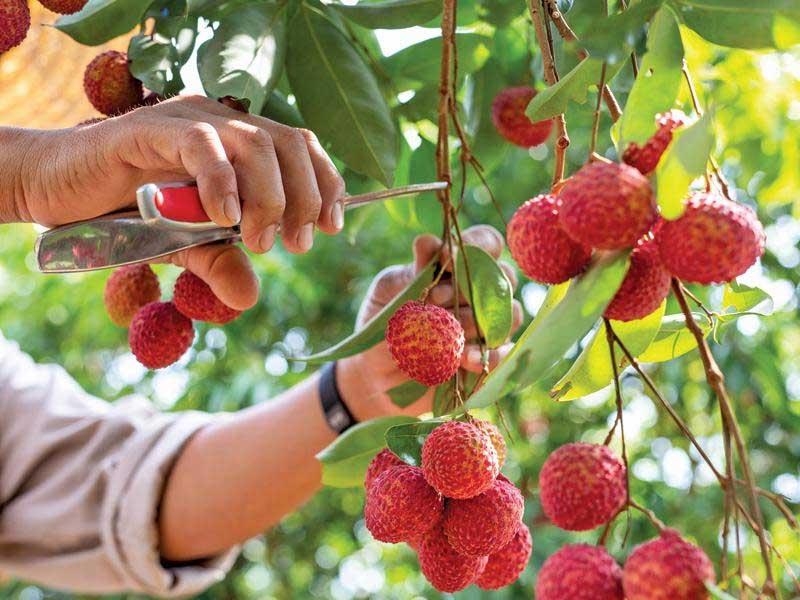 Rộng đường xuất khẩu nông sản Việt