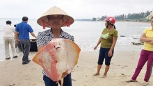 Nước biển đạt 'chuẩn',  cá vẫn… nhiễm độc