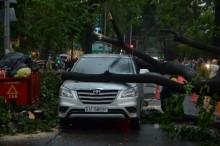 Sài Gòn mưa lớn, cây xanh bật gốc đè ô tô