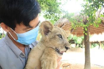 """24 giờ của """"bố hổ"""", """"mẹ sư tử"""" ngoài đời tại Vinpearl Safari"""