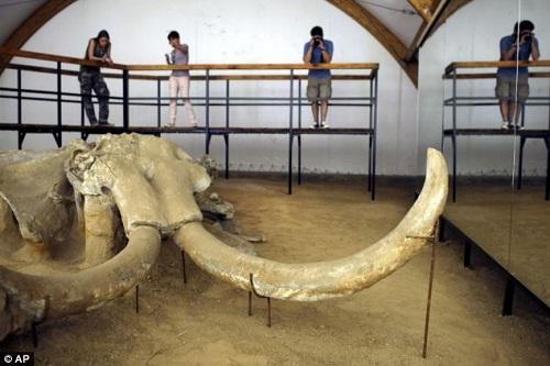 Bí ẩn nghĩa địa của loài voi