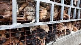 [VIDEO] 7 năm bắt trộm 3.000 con chó