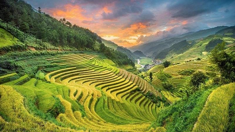 Việt Nam sở hữu 2 ruộng bậc thang đẹp nhất thế giới