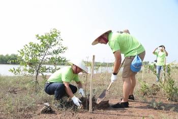 PVEP tham gia trồng cây, phục hồi rừng ngập mặn