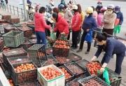 Thành ủy Hà Nội chỉ đạo rà soát, để hỗ trợ tiêu thụ hàng hóa cho nhân dân vùng có dịch
