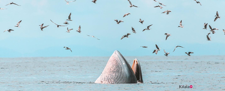 Các loài sinh vật biển đang