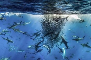 """Các loài sinh vật biển đang """"chạy trốn"""" khỏi vùng nhiệt đới"""