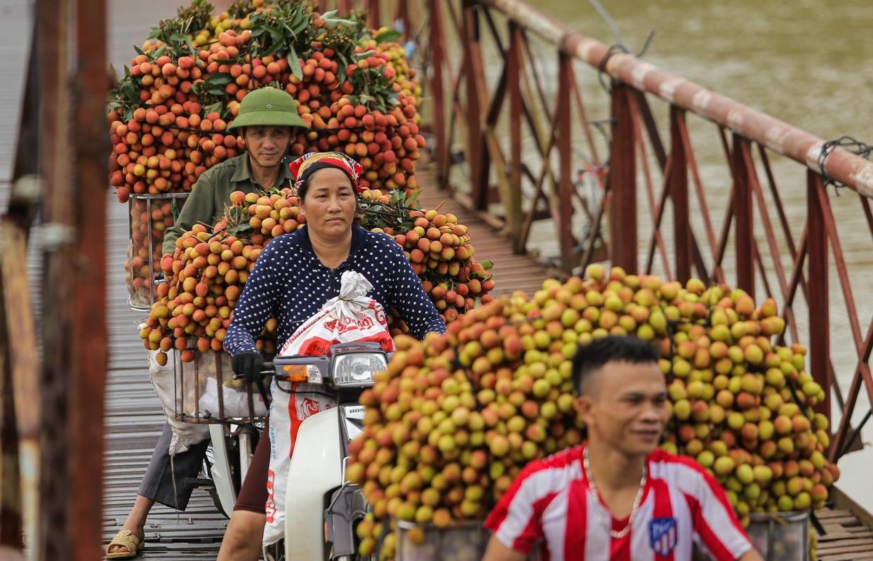 Giữa tâm dịch, Bắc Giang vẫn xuất được 15 tấn vải thiều sang Nhật Bản