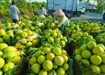 Nông sản Sóc Trăng cần được hỗ trợ tiêu thụ