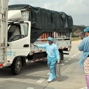 Trung Quốc tạm dừng nhập khẩu thanh long tại cầu phao tạm Đông Hưng