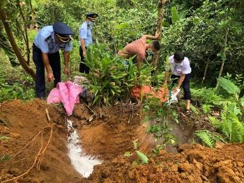 Hà Giang: Tiêu hủy trên 100 tấn lợn nhiễm dịch tả châu Phi