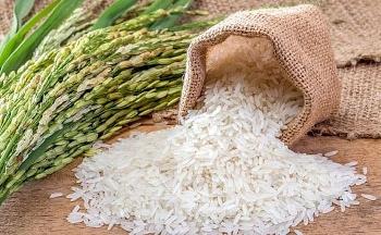 Gạo xuất khẩu có tháng thứ 3 gia tăng mạnh về sản lượng và giá trị