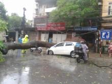 Gió giật mạnh, cây đổ hàng loạt trên đường phố Hà Nội