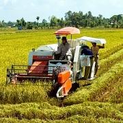 Kéo dài thời gian hỗ trợ phí bảo hiểm nông nghiệp đến hết năm 2021