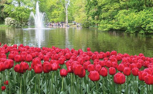 vuon dia dang trong toan hoa tulip