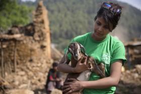 [Chùm ảnh] Những con vật sống sót kỳ diệu sau động đất kinh hoàng ở Nepal