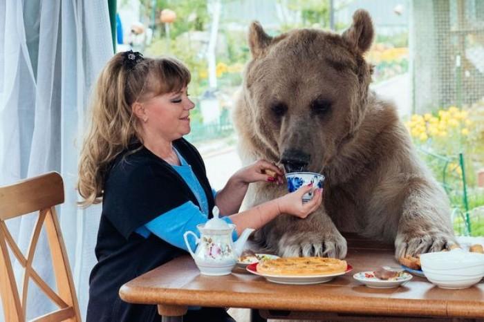 Kinh ngạc cặp vợ chồng nuôi gấu như con ruột